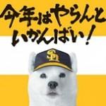 2014年3月のヤマダ電機蚤の市は福岡ヤフオクドーム!決算セールもかぶっています!